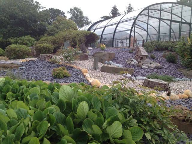 Slate chippings in garden with greenhouse and plants