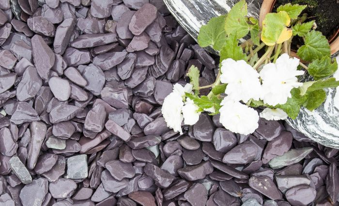 Blue slate chippings next to flower