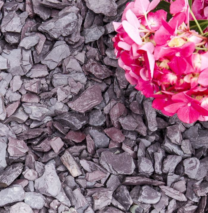 Plum Slate Chippings in 40mm size alongside a flower