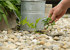 Weed-busting: Protecting Your Garden Gravel & Slate Chippings