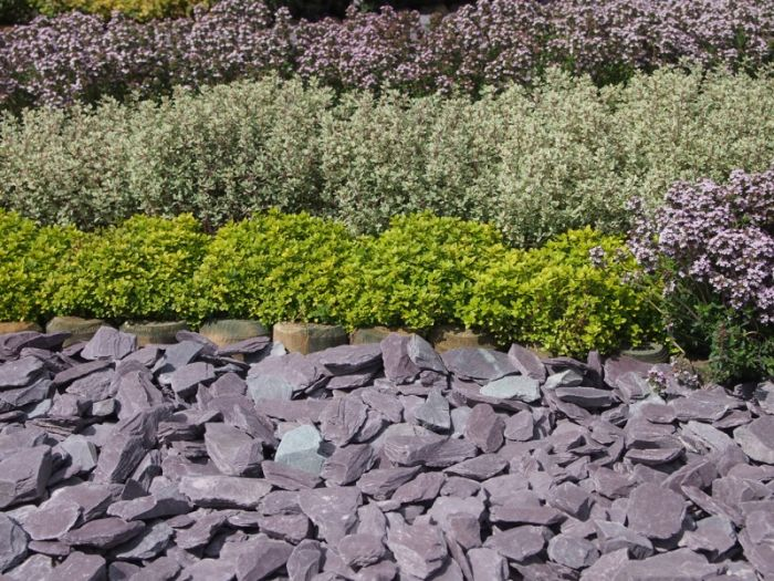 Slate Chips in Plum colour alongside plants